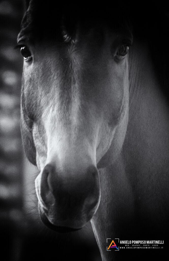 Lo sguardo di un cavallo